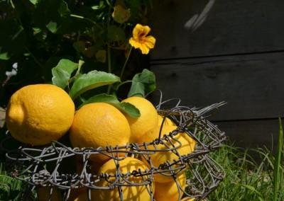 Les citrons du Moment